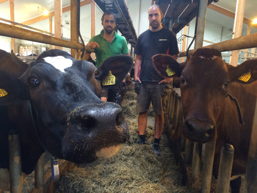 Så lyckas de hålla liv i gården trots mjölkkrisen