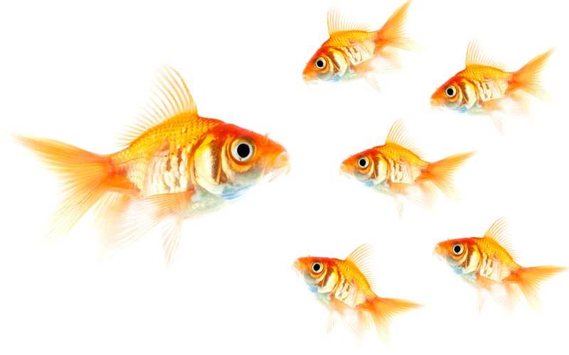 <![CDATA[Spelplanen för företagare håller på att ritas om. Nu kan småföretagarna slå ut de stora drakarna. Foto Istock]]>