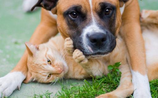 Gör affärer på husdjuren