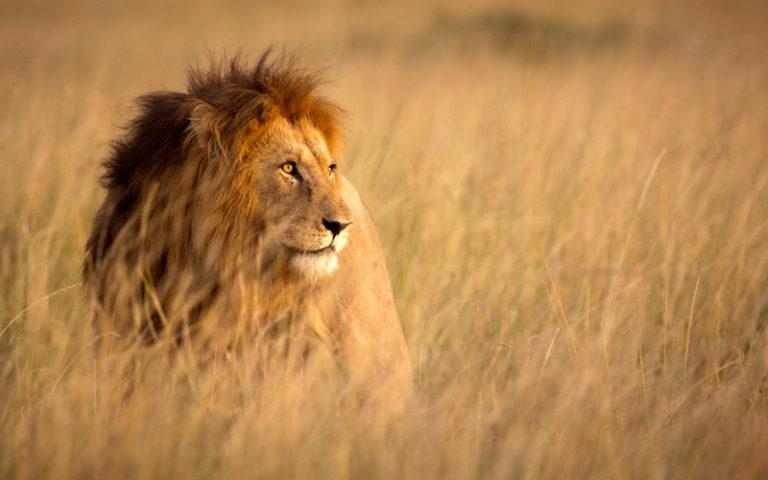 Ta kontroll över dina tankar med lejonagendan