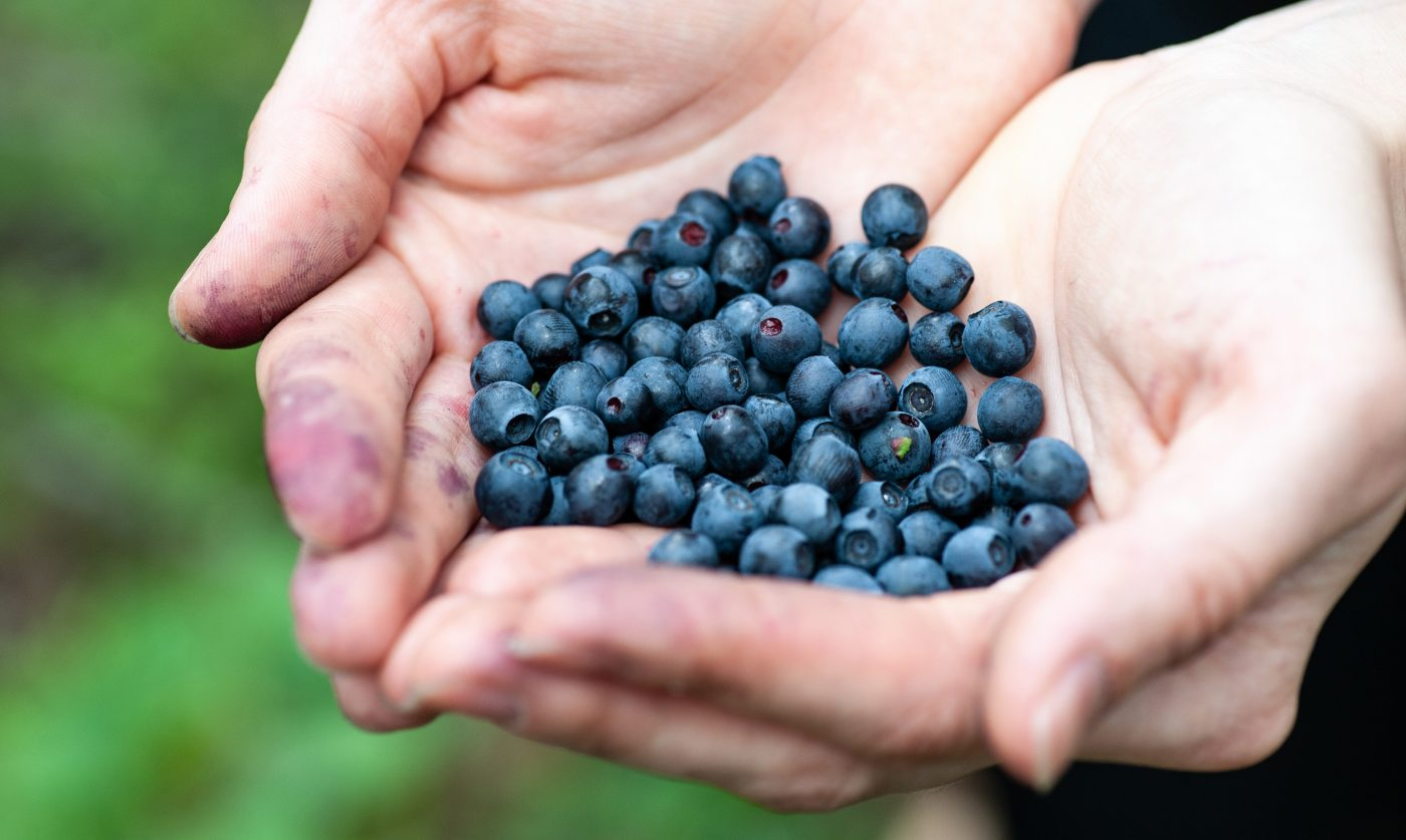 Woman holding in hands fresh blueberries