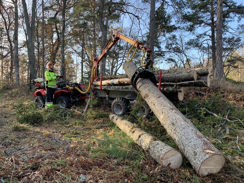 TippMicke trädfällning